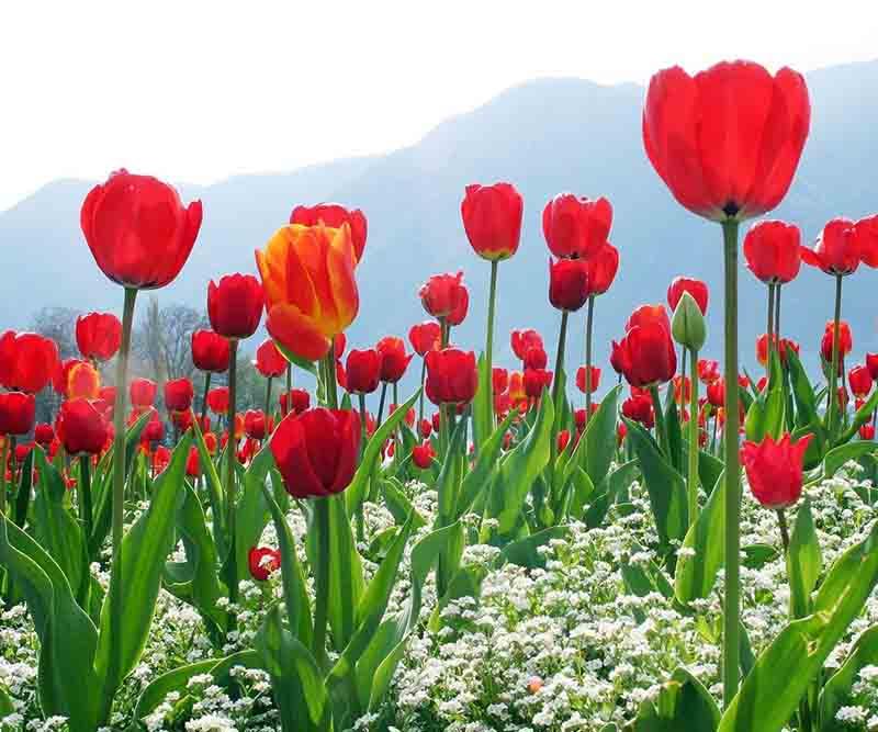 Tulip Garden Trip